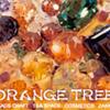 ORANGE TREE 様